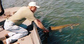 muskie_fishing_guide_hayward_wisconsin_release_1