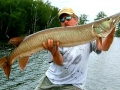 muskie_fishing_guide_hayward_wisconsin_7